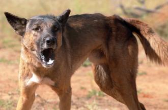WILD DOG CONTROL
